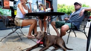 Best Dog Friendly Restaurants in Wilmington