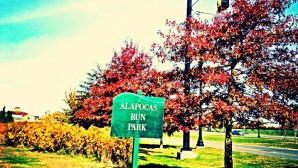 Take a Day Trip to Alapocas Run State Park