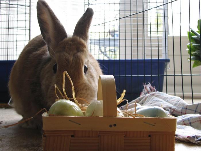 rp_Easter-Bunny-e1395351920727.jpg