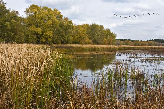 rp_Great-Meadows-National-Wildlife-Refuge-e1426630451559.jpg