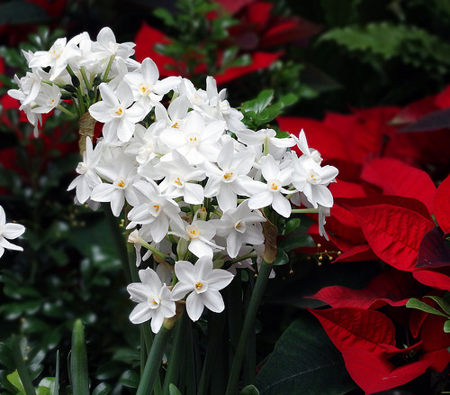 A Longwood Christmas: Where the Holidays Meet Horticulture